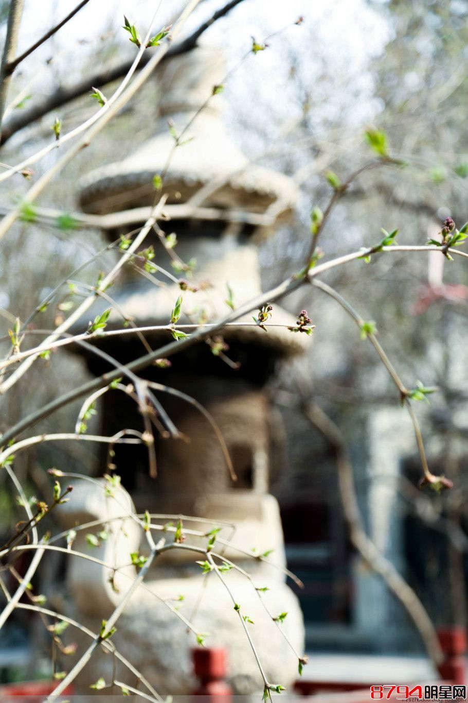 王小源 花花_北京--法源寺,那玉兰、那树、那僧人们 - 8794明星网
