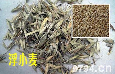 小麦颖果纵切结构图