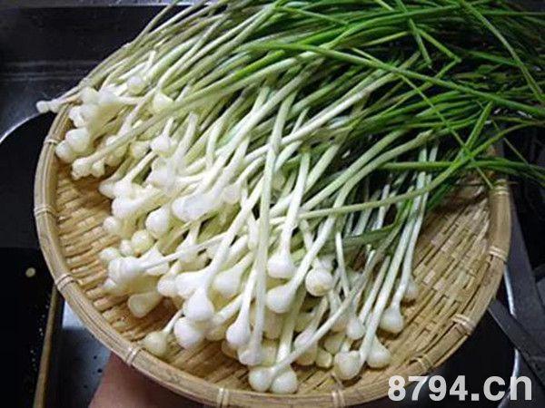 薤白(野蒜)的功效与作用及食用禁忌 野蒜的药用及食用营养价值