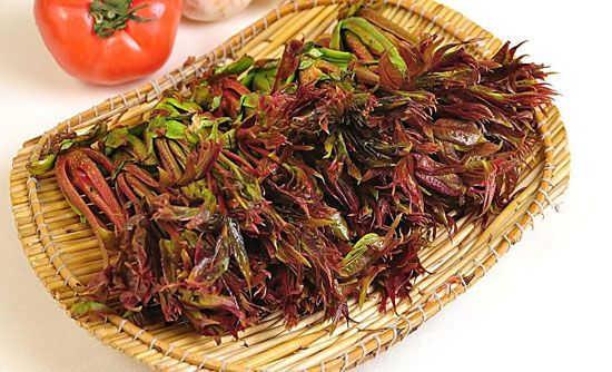 香椿的功效与作用及食用禁忌 香椿的营养价值和食用方法