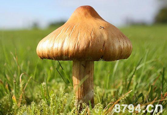蘑菇的功效与作用及食用禁忌 蘑菇的营养价值成分