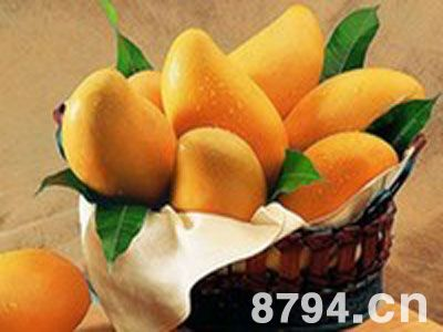 芒果的功效与作用及食用禁忌 芒果的营养价值成分 吃芒果的好处