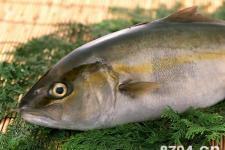 中国鱼俗探源