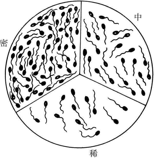 猪的关节结构示意图