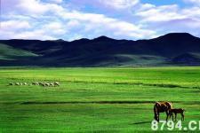 草原:世界陆地的五分之一被它所覆盖