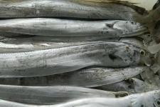 带鱼的营养价值成分含量 带鱼功效与作用及食用禁忌
