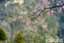 岁岁迎春鞭春牛 立春迎春习俗的古老的传说