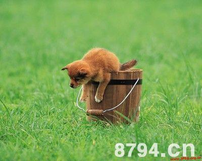 农夫色人和狗_15:13:56 来源:网络整理 手机阅读    第二年,农夫按照仙狗的传教