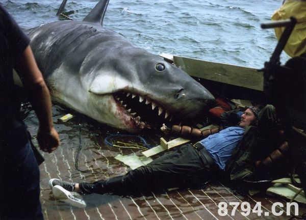 大白鲨电影影评:是真的吗