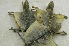 蛤蚧的作用与功效食用禁忌 蛤蚧的食疗方法