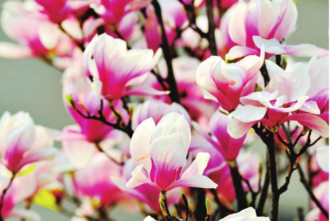 四川最美的地方药王谷雪域高原的粉色迷醉 药王谷旅游攻略