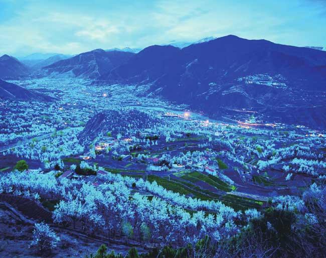 密密麻麻的梨花散落各处,像是给大金川覆盖了一层厚厚的积雪。
