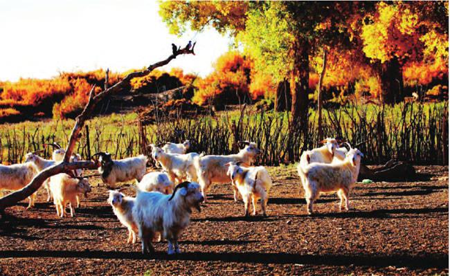 秋天最美最值得去的12个地方 中国秋季最适合去的地方旅游景点推荐