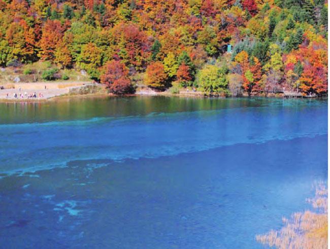 """被称为""""海子""""的九寨沟湖水,清澈见底,如镜一般倒映着两岸树木。"""