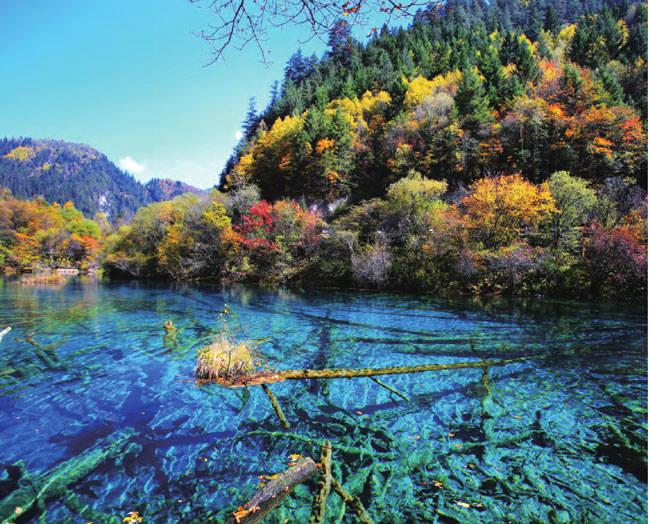 秋天的九寨沟色彩缤纷,蓝净的湖水与树影相互错杂,宛如童话世界。