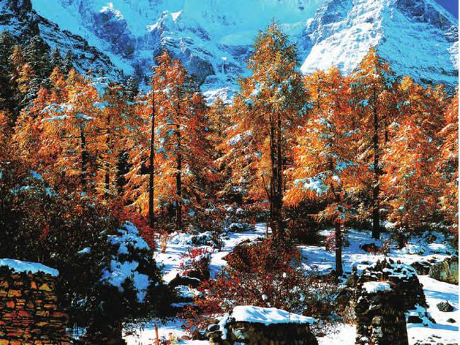 尽管已是白雪皑皑,却仍掩不住生命的活力,成片的林叶依旧绚丽多彩。