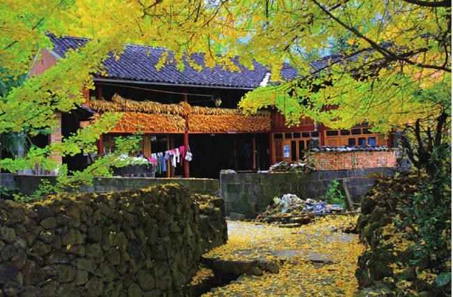 云南最美最值得去的地方腾冲:丝绸之路银杏飘落 什么时候去最好
