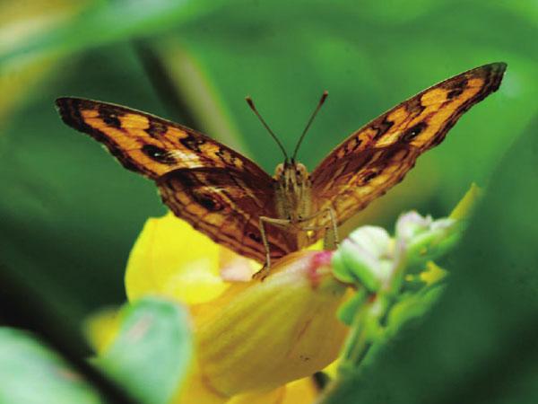 具有热带雨林气候的西双版纳气温舒适,阳光充足,是动植物生存的乐土。