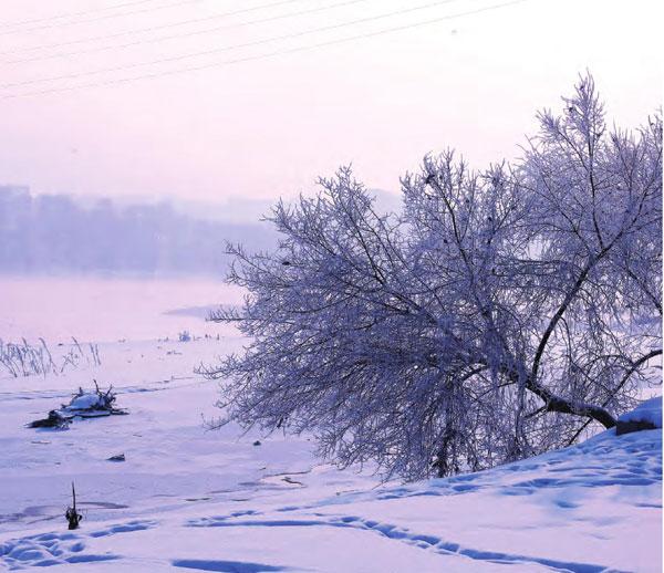冬季,白色赋予了大地一片苍茫,倾斜着的雾凇与环境融为一体,宛如一幅水墨画。
