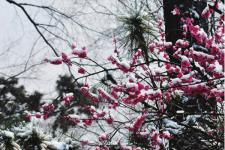南京什么时候去最好 江苏最美的地方南京六朝古都的雪影梅香