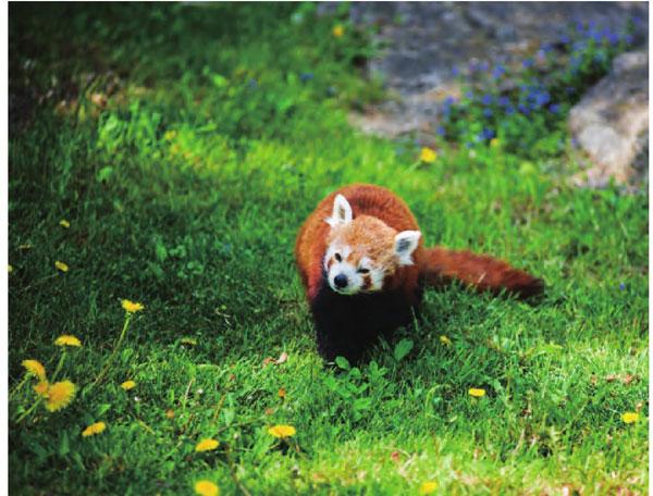森林覆盖广袤的不丹也是动物们的美丽乐园。