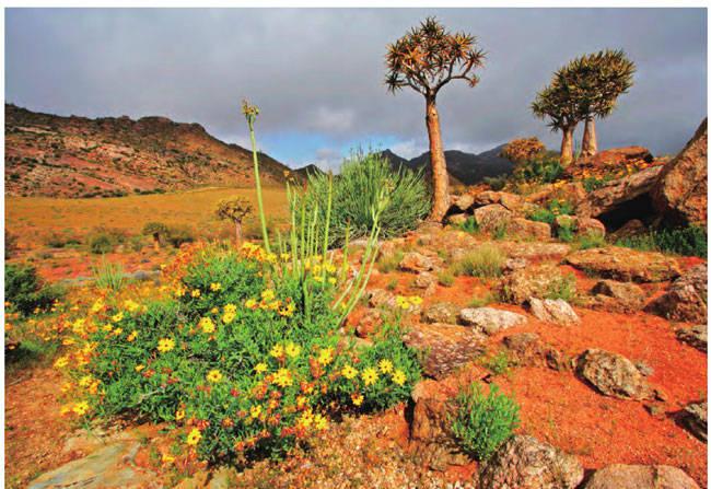 南非·纳马夸兰