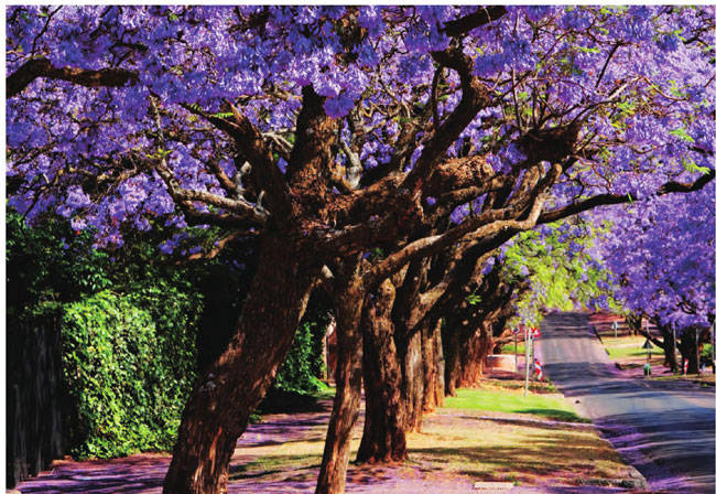 南非·比勒陀利亚