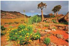 南非最值得一看地方纳马夸兰旅游最佳时间 沙漠花海盛放生命奇迹