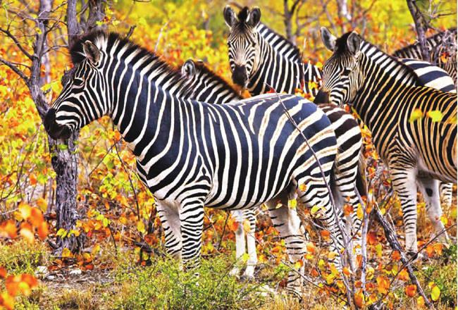 南非·克鲁格国家公园