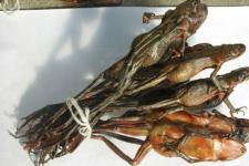 哈士蟆的功效与作用及食疗方选 哈士蟆的食用禁忌