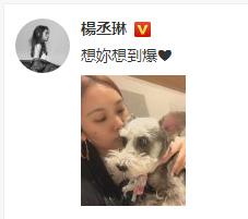 """杨丞琳亲吻爱犬称""""想你想到爆"""" 网友:是想李想到爆吧!"""