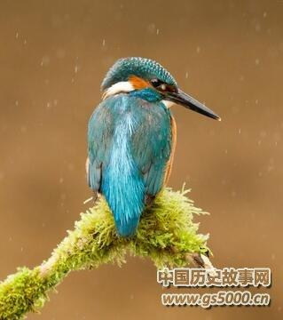 藏族民间传说:幸福鸟
